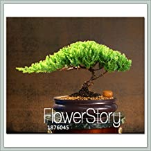 Hot Sale!10 Pieces/Lot juniper bonsai tree potted flowers office bonsai purify the air absorb harmful gases,#LILOMH