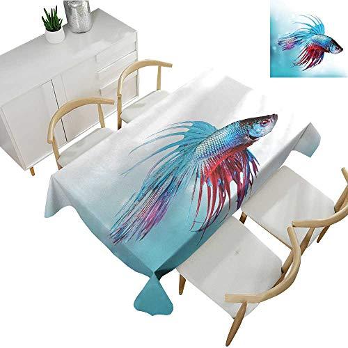 Warm Family Aquarium Easy Care Tablecloth Siamese Fighting Betta Fish Swimming in Aquarium Aggressive Sea Animal 50