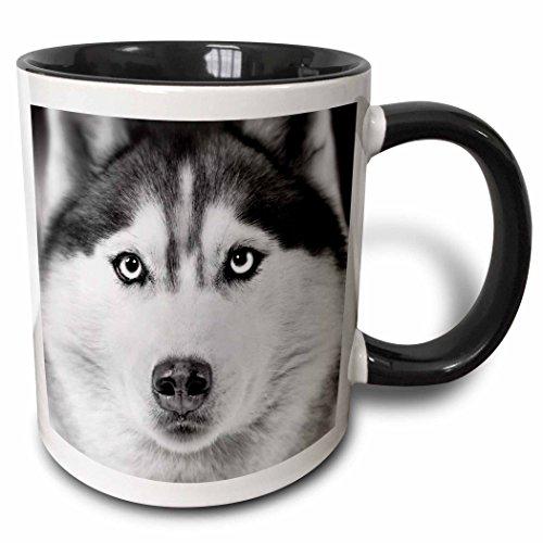 3dRose Siberian Husky Black White