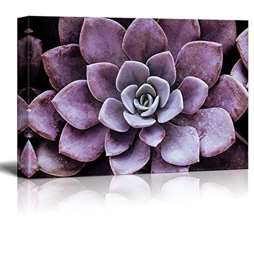 Closeup of a Purple Succulent Plant Gallery