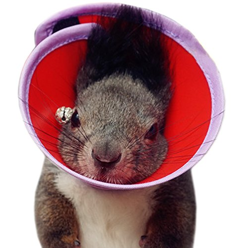 Couture - Verfi Recovery Collar with Soft Edge for Dwarf Hamster, Mouse, Rabbit and Guiena Pigs - Color: Red ()