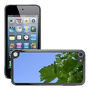 Print Motif Coque de protection Case Cover // M00290621 Hojas del árbol follaje temporada de // Apple ipod Touch 5 5G 5th 6 6G 6th