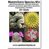 Pincushion Cactus Mix (Mammillaria) 50+ Seeds