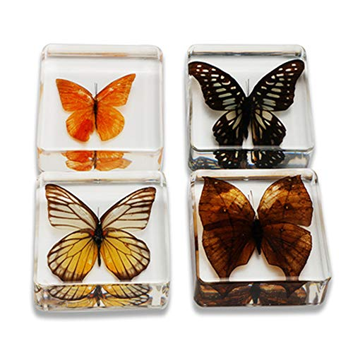 Animal Specimen Real Butterfly Embedded, Entomology for sale  Delivered anywhere in Canada