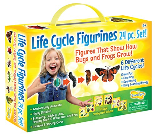 - Insect Lore Life Cycle Figurines 24 Pc Set