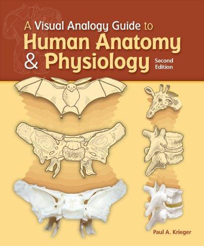 Visual Analogy Gde.Human Anat.+Phy.(Ll)