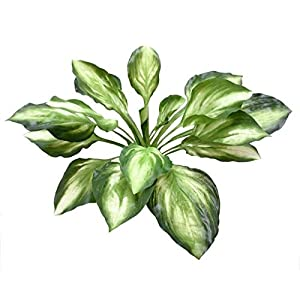 Renaissance 2000 Artificial Hosta Bush, Green 6