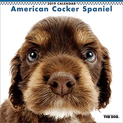 amazon com the dog wall calendar 2019 american cocker spaniel