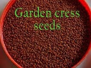 Garden Cress Seeds For Height