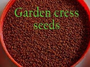 Garden Cress Seeds In Arabic