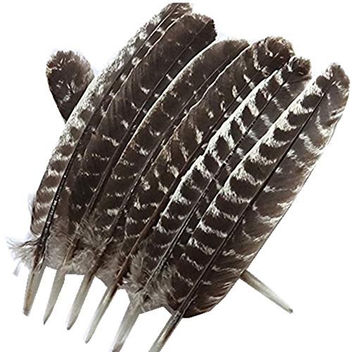 WAKEACE Turkey Feathers 10 Pieces/PCS Discount Wholesale Discount Wholesale DIY Decoration Collection Purification Energy Feathers ()