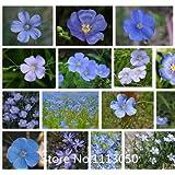 Promotion Bonsai basket flower seeds 100 pcs Blue Flax seeds Organic Newly Harvested Beautiful Blue Flower,! Novel