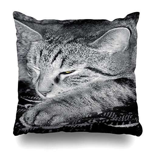 Black Tabby Cat - Ahawoso Throw Pillow Cover Square 16x16 Lazy Gray Black Tabby Cat Dozing One Eye Up Slightly Yellow Close Cute Detail Domestic Doze Design Zippered Cushion Case Home Decor Pillowcase