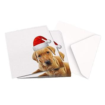 Christmas Card Pack of 10x1 Design ORIGINAL PHOTOGRAPH A FOX RED