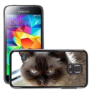 Super Stella Slim PC Hard Case Cover Skin Armor Shell Protection // M00149912 Cat Mieze British Shorthair Dear // Samsung Galaxy S5 MINI SM-G800