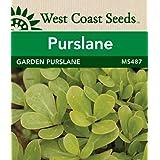 Purslane Seeds - Garden Purslane (approx. 1125 seeds)
