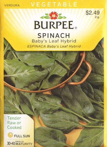Spinach Ounce 1 Seeds (Burpee 54826 Spinach Baby's Leaf Seed Packet)