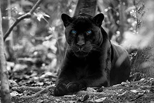 Black Panther (N12) - Animal Picture Art Print Canvas Poster(28x42inch)