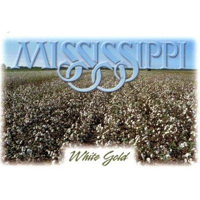 Mississippi Postcard 12334 White Gold - Case Pack 750 SKU-PAS382040 (Mississippi Postcard)