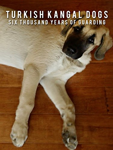 Turkish Kangal Dogs - Six Thousand Years of Guarding for sale  Delivered anywhere in USA