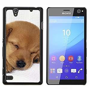TECHCASE---Cubierta de la caja de protección para la piel dura ** Sony Xperia C4 ** --Cachorro Labrador Retriever Luz del perro de Brown