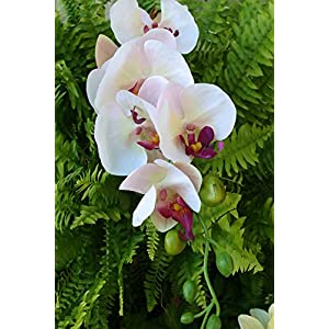 "Way Home Fair Phalaenopsis Orchid Spray in Cream with Pink & Purple Highlights - 33"" Tall 7"