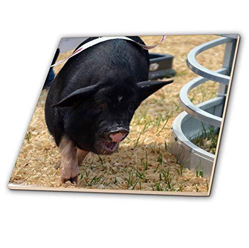 (3dRose Susans Zoo Crew Animal - Pot Bellied Pig racings Corner fair - 4 Inch Ceramic Tile (ct_294165_1))