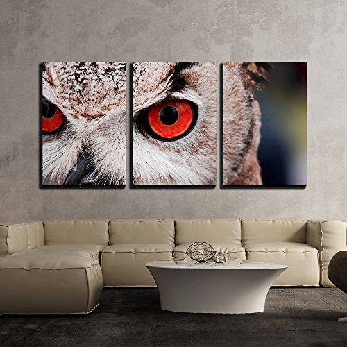 - wall26 - 3 Piece Canvas Wall Art - Closeup of an Owl with Red Eyes - Modern Home Decor Stretched and Framed Ready to Hang - 16