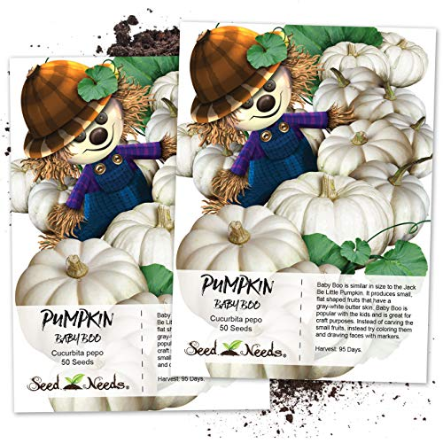 (Seed Needs, Baby Boo Pumpkin (Cucurbita Pepo) Twin Pack of 50 Seeds Each)