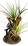 Air Flora 20'' Plant Woodpecker, Small, Mix Colors