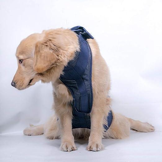 Arnés para Perros, Cinturón De Asistencia, Recuperación De Ayudas ...