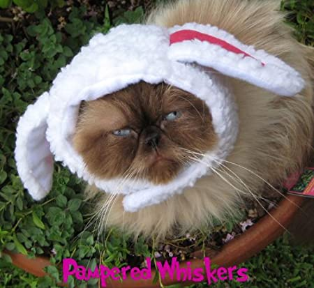 Amazon.com : Pampered Whiskers The Sheepish One sheep costume hat for dogs and cats (6-10