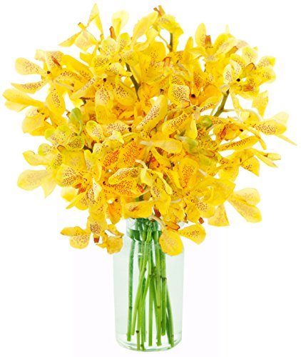 KaBloom Sunset Serenade Yellow Mokara Orchid Bouquet: 10 Fresh Yellow Mokara Orchids from Thailand with Vase