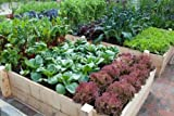 15000-Non-GMO-Heirloom-Vegetable-Seeds-Survival-Garden-32-Variety-Pack-by-Open-Seed-Vault