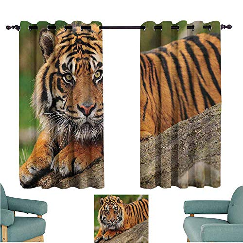 (DONEECKL Sliding Curtains Tiger Noble Beast Crouching on a Rock Sumatrian Large Cat Beautiful Nature Photography Thermal Insulated Tie Up Curtain W55 xL72 Multicolor )