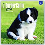 Border Collie Puppies 2017 Square (Multilingual Edition)