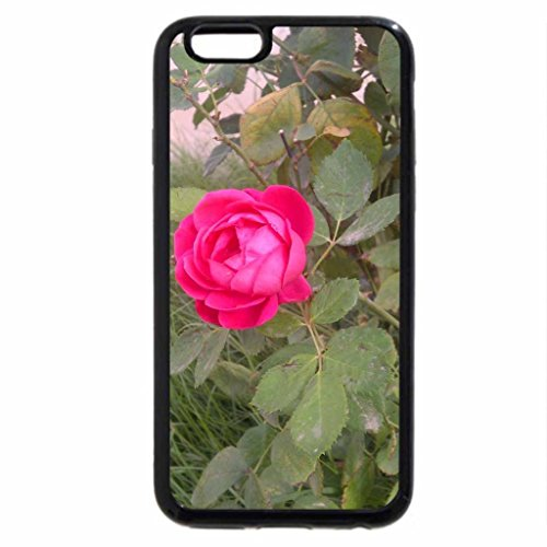 iPhone 6S / iPhone 6 Case (Black) Riyadh flowers