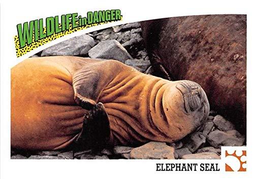 - Elephant Seal trading card 1992 World Wildlife Panini #32