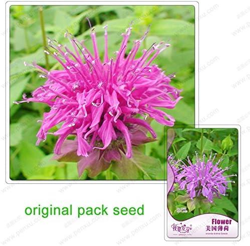 60 semillas / pack, semillas didyma de Monarda, menta de Estados Unidos, Balcón plantas en macetas, semillas de flores de jardín: Amazon.es: Jardín