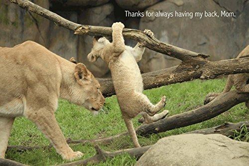 Caring Hands Animal Hospital - 7