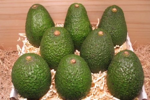 California Avocado Gift Box Online (Us Gifts Online)