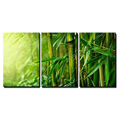 Bamboo Forest And Sunlight - 3 Panel Canvas Art