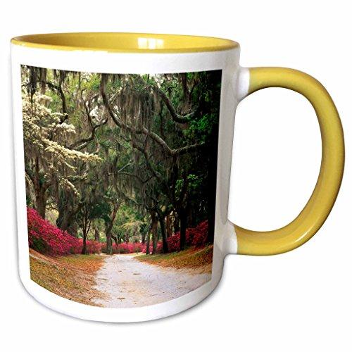 3dRose Danita Delimont - Georgia - Azaleas, live oaks, moss, Savannah, Georgia, USA - US11 AJE0031 - Adam Jones - 15oz Two-Tone Yellow Mug (mug_143770_13)