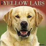 Just Yellow Labs 2018 Wall Calendar (Dog Breed Calendar)
