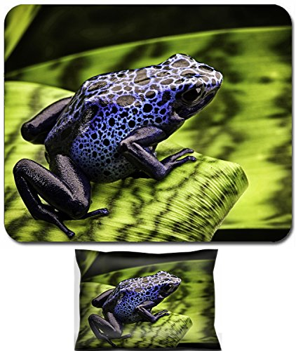 Animal Rainforest Pictures (Luxlady Mouse Wrist Rest and Small Mousepad Set, 2pc Wrist Support design IMAGE: 42958098 blue poison dart frog Dendrobates Azureus A beautiful tropical and poisonous amazon rain forest animal)