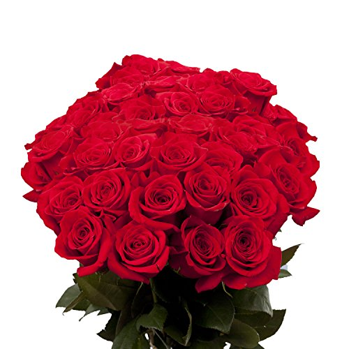 birthday-red-roses-50-red-roses