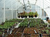 "Solexx Conservatory Greenhouse 16' X 16' X 9'6"" - 3.5mm"