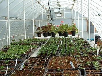 Solexx Conservatory Greenhouse 16u0027 X 20u0027 X ...