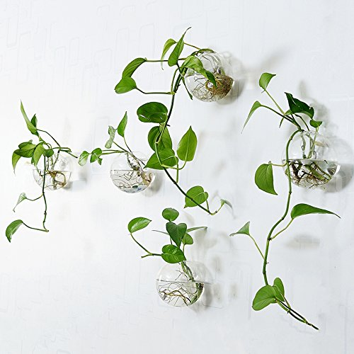 Buy terrarium containers