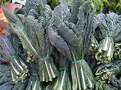 400+ Black (Elephant) Kale Seeds